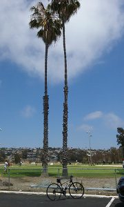 PB golf course - San Diego Scenic Cycle Tours