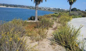 mellow after labor day - Scenic Cycle Tours - San Diego Bike Tours