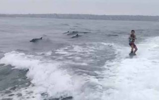wakeboarding with dolphins - San Diego Scenic Cycle Tours