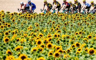 tour de france flowers - San Diego Scenic Cycle Tours