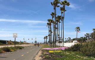 silver strand flowers - San Diego Scenic Cycle Tours