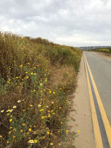 fiesta island flowers - San Diego Scenic Cycle Tours