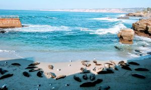 la jolla seals - San Diego Scenic Cycle Tours