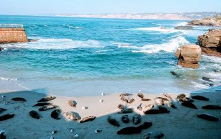la jolla seals - San Diego Scenic Cycle Tours