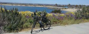 mission bay bike path flowers - San Diego Scenic Cycle Tours